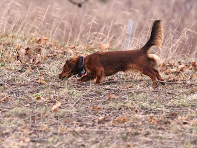Dachshund Association of Long Island – Sep 23, 2018