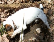 New England Terrier Club Trial