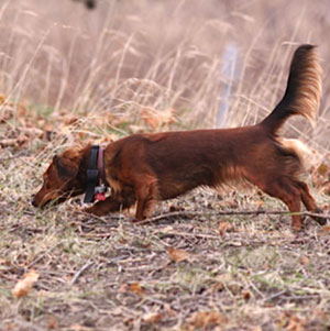 Dachshund Assoc of Long Island Trial